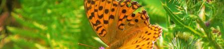 être léger et  ferme comme le papillon sur la fleur